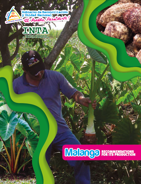 Malanga RECOMMENDATIONS FOR ITS PRODUCTION