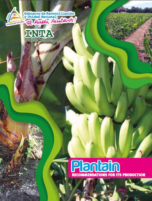 Plantain RECOMMENDATIONS FOR ITS PRODUCTION (creole)
