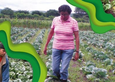 Cabbage RECOMMENDATIONS FOR ITS PRODUCTION